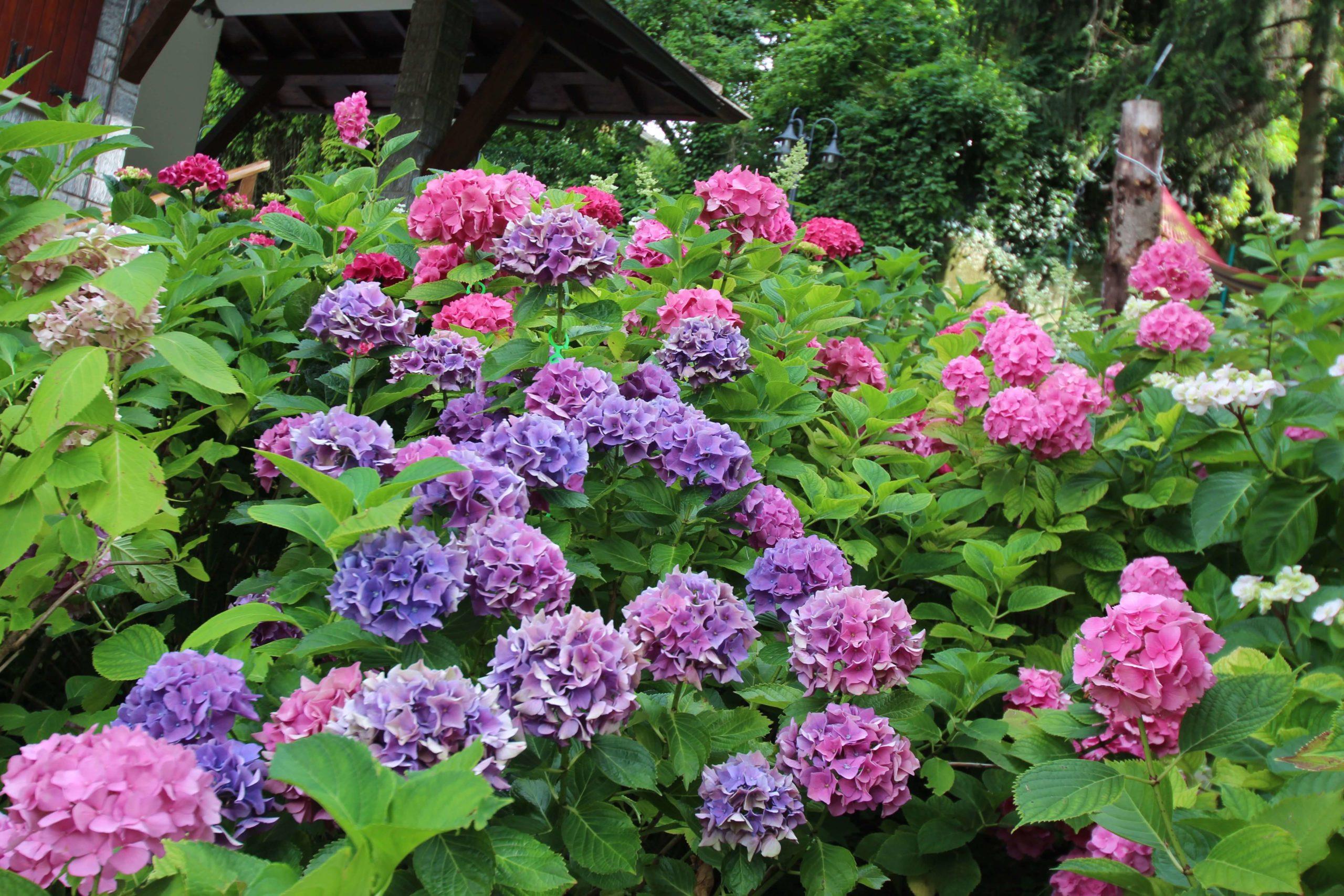 Dalla bellezza alla Qualità di un giardino, il passo è breve. post thumbnail
