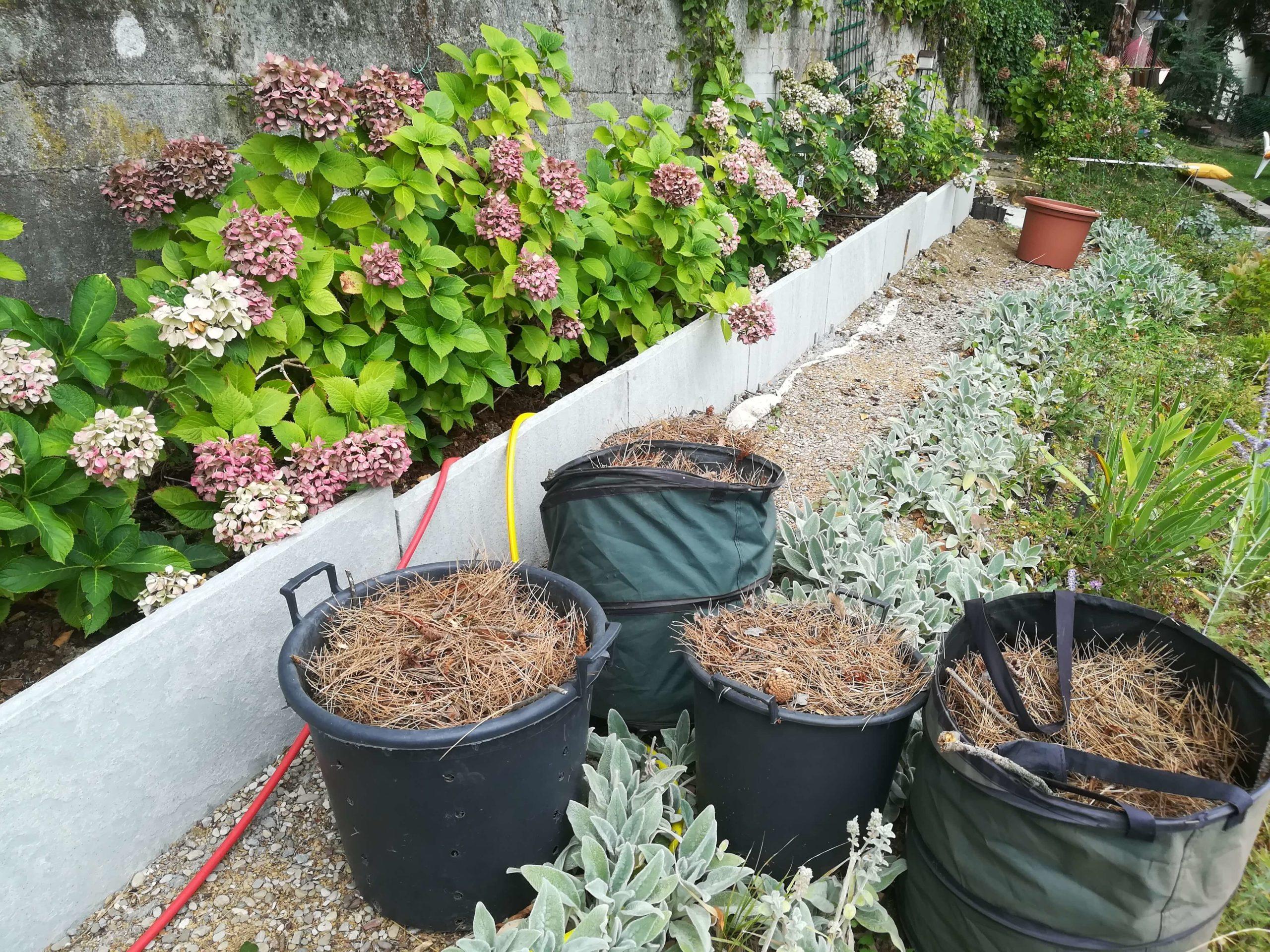 La pacciamatura con aghi di pino per proteggere le nostre ortensie dal caldo e dal gelo. post thumbnail