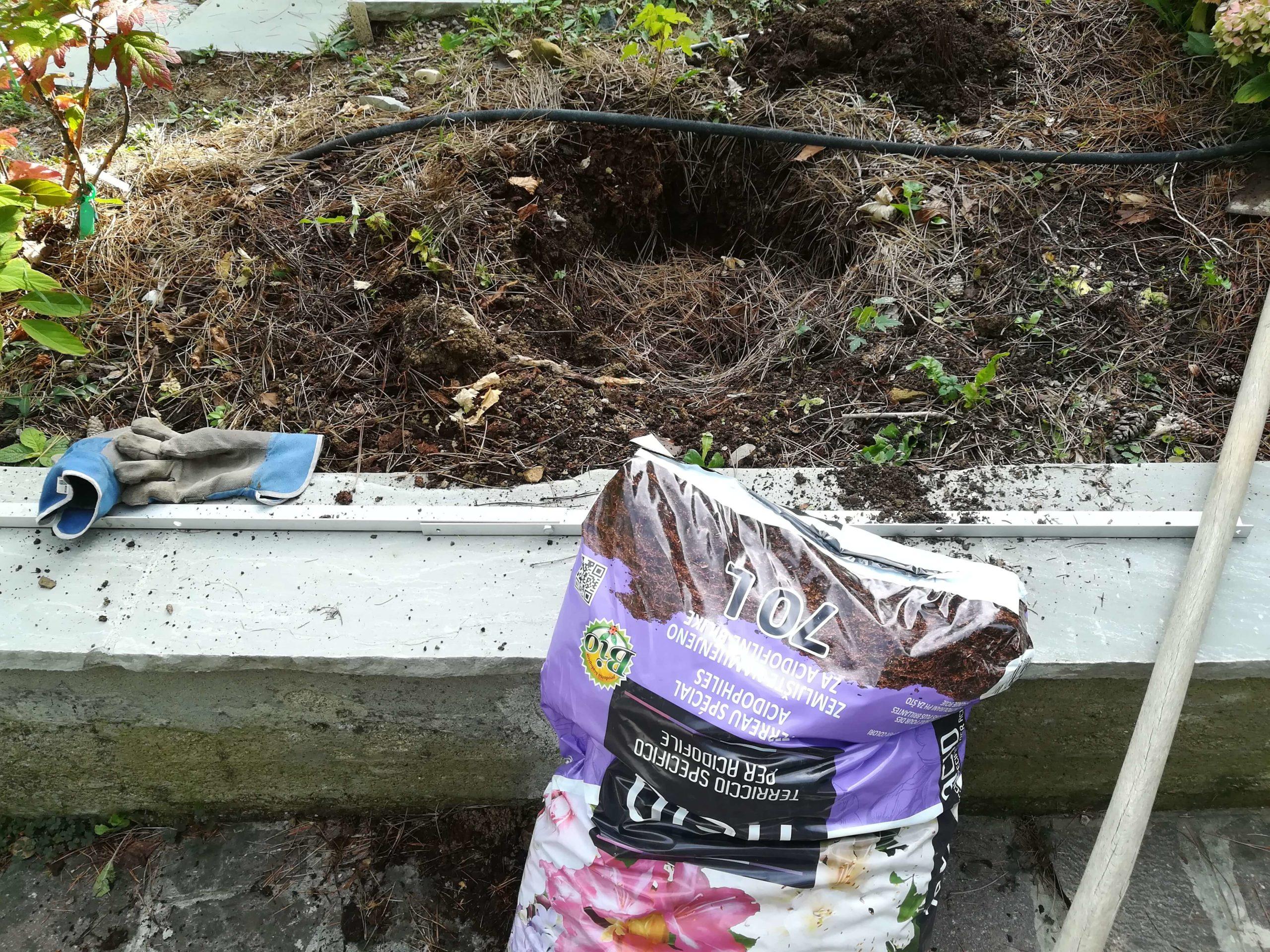 Come spostare una pianta di ortensia da una zona all'altra del giardino. post thumbnail