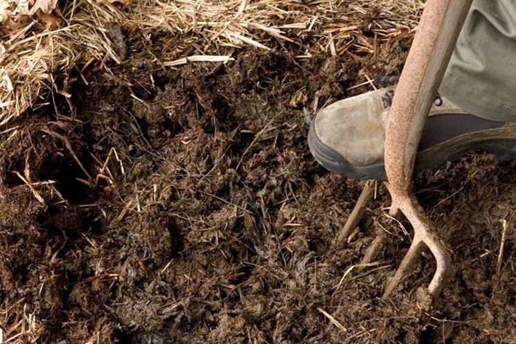 A proposito del terreno per acidofile: l'esperienza di Pino Siciliano post thumbnail