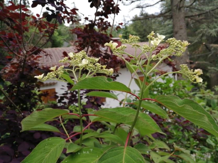 I giardini a Serramazzoni: Un mese di ritardo e un orologio biologico post thumbnail